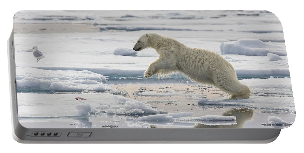 Nis Portable Battery Charger featuring the photograph Polar Bear Jumping by Peer von Wahl