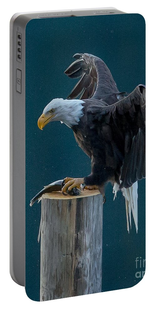 Bald Eagle Portable Battery Charger featuring the photograph Pole Position by Joy McAdams