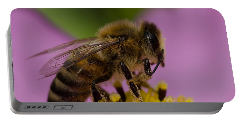 Bee Portable Battery Charger featuring the photograph Pollination by Don Schwartz