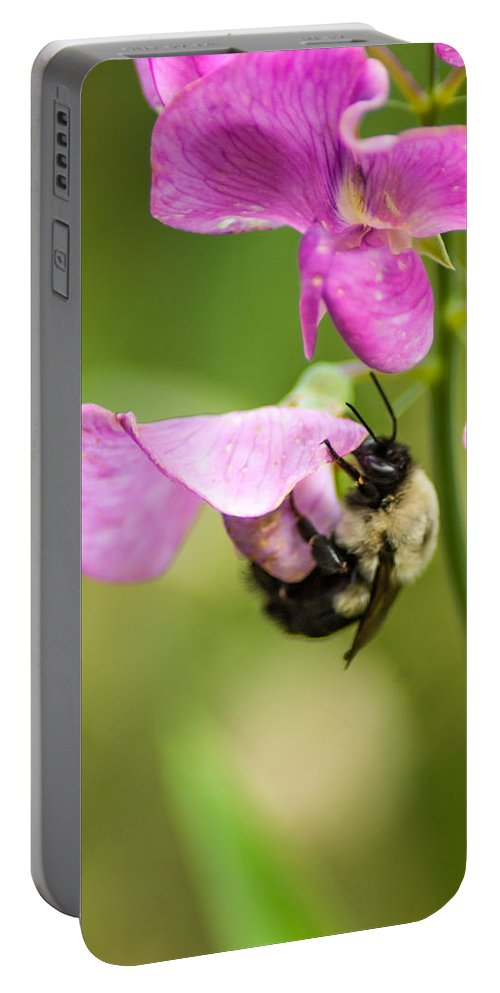 Optical Playground By Mp Ray Portable Battery Charger featuring the photograph Pollination Nation Viii by Optical Playground By MP Ray