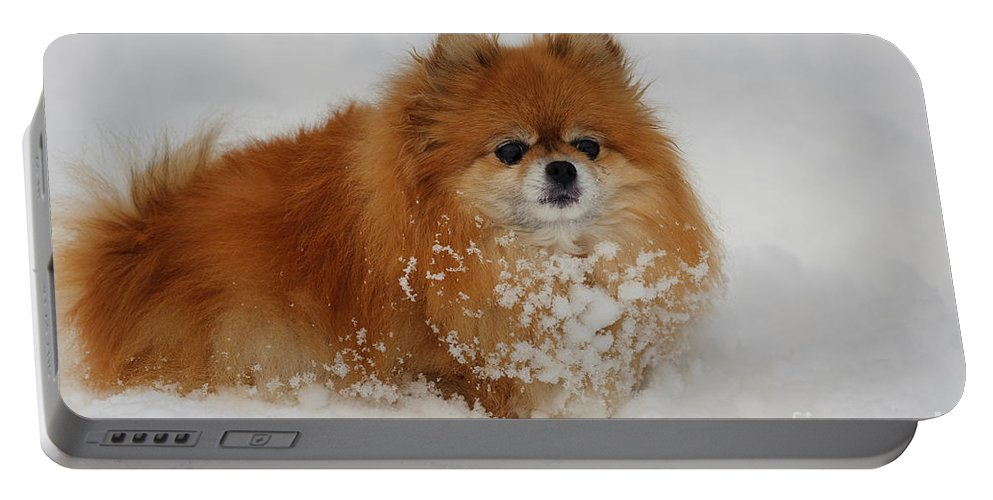 Pomeranian Portable Battery Charger featuring the photograph Pomeranian In Snow by John Shaw
