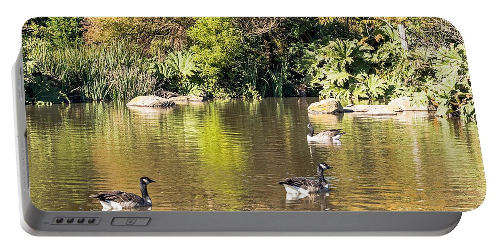 Birds Portable Battery Charger featuring the photograph Pond Geese by Kate Brown