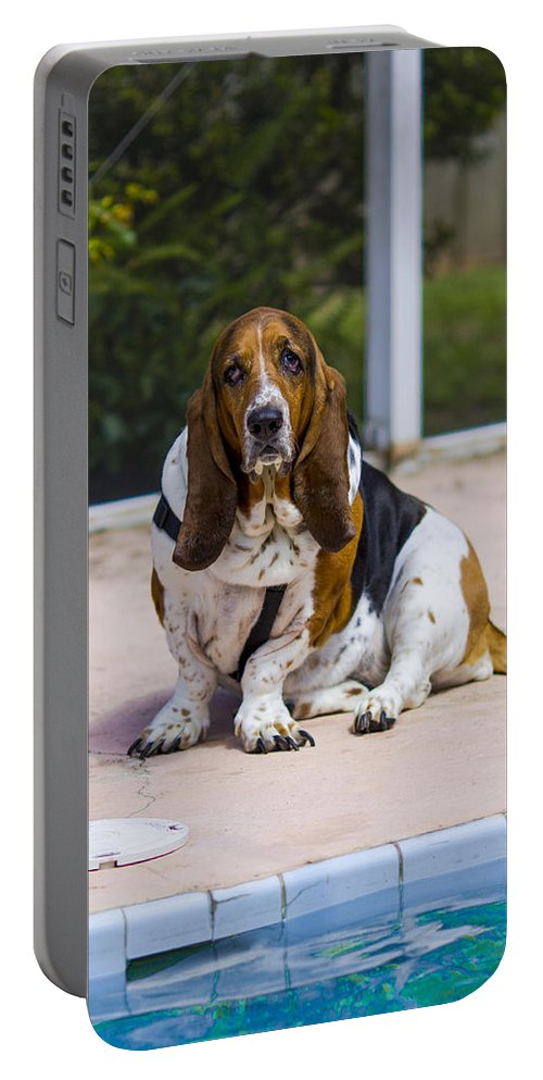 Water Portable Battery Charger featuring the photograph Pool Side Basset by Stephen Brown