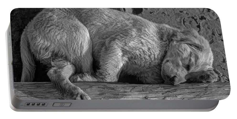 Puppy Portable Battery Charger featuring the photograph Pooped Puppy Bw by Steve Harrington