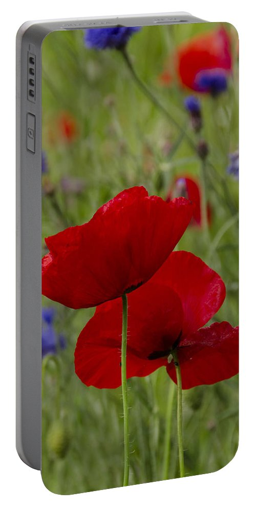 Flower Portable Battery Charger featuring the photograph Poppies And Cornflowers by TouTouke A Y