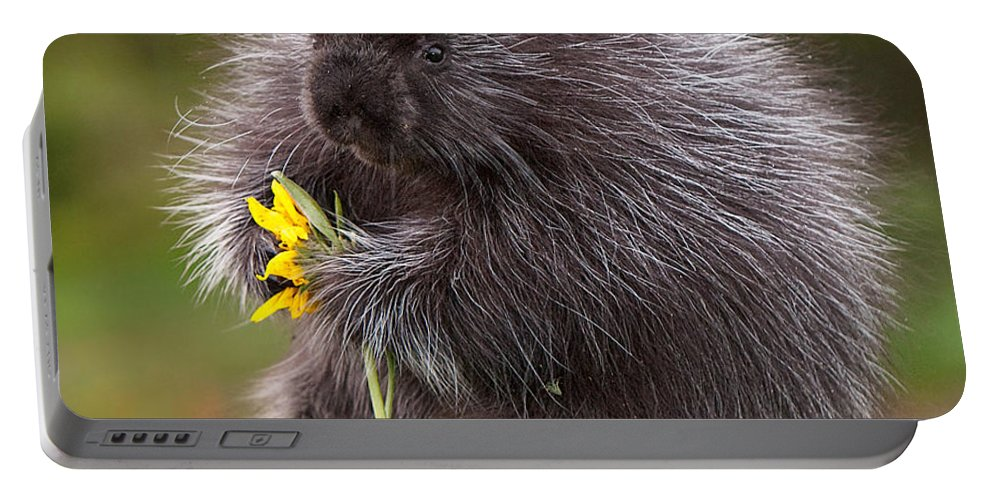 Animal Portable Battery Charger featuring the photograph Porcupine With Arrowleaf Balsamroot by Jerry Fornarotto