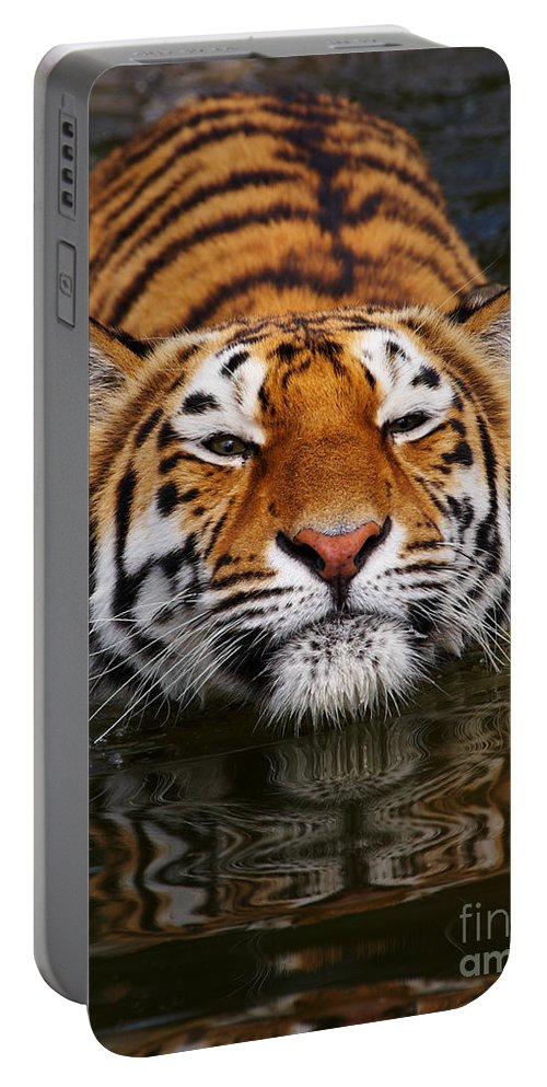 Pool Portable Battery Charger featuring the photograph Portrait Of A Bathing Siberian Tiger by Nick Biemans