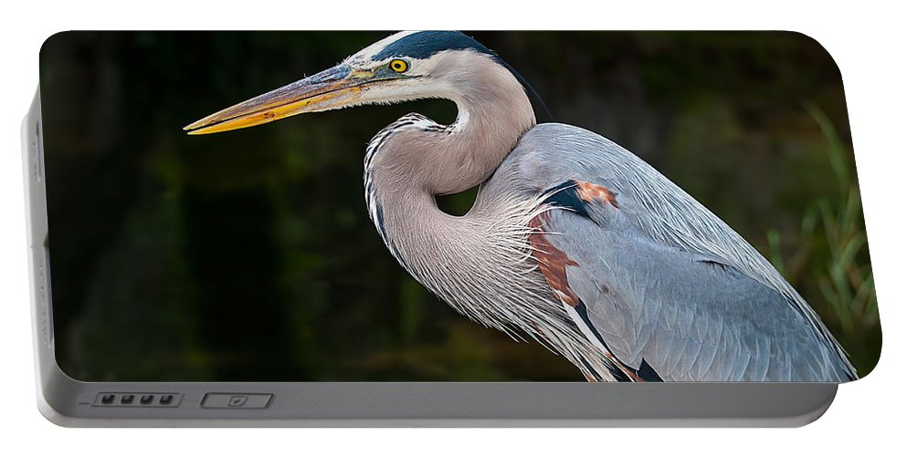 Great Portable Battery Charger featuring the photograph Portrait Of A Blue Heron by Photos By Cassandra