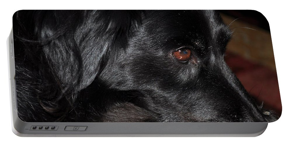Art Portable Battery Charger featuring the photograph Portrait Of A Border Collie by Paulette B Wright