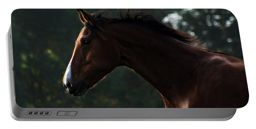 Horse Portable Battery Charger featuring the photograph Portrait Of A Horse by Angel Ciesniarska