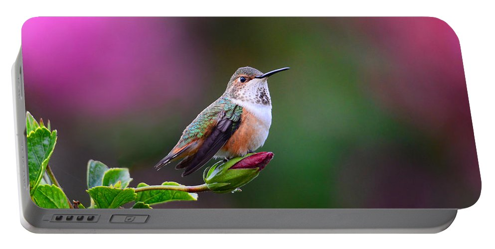 Hummer Portable Battery Charger featuring the photograph Portrait Of A Hummer 2 by Lynn Bauer
