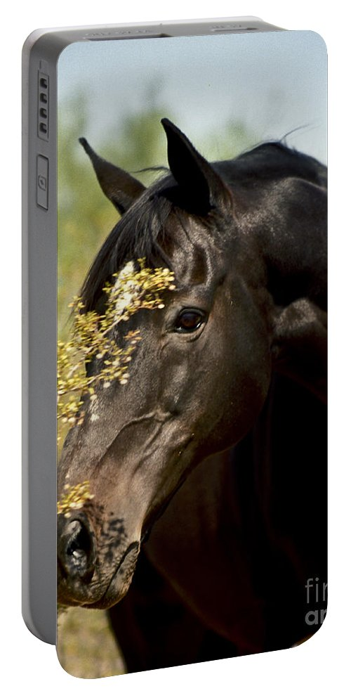 Horse Portable Battery Charger featuring the photograph Portrait Of A Thoroughbred by Kathy McClure