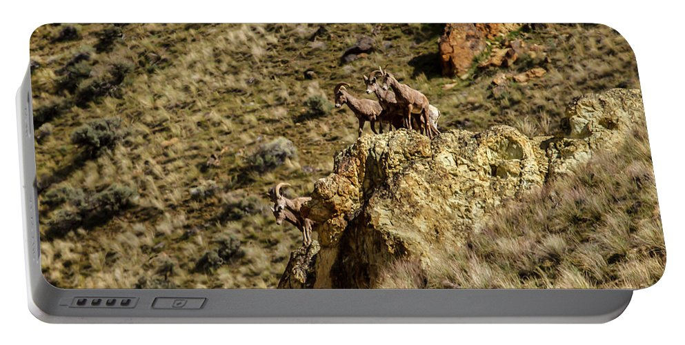 Sheep Portable Battery Charger featuring the photograph Posing Bighorn Sheep by Robert Bales