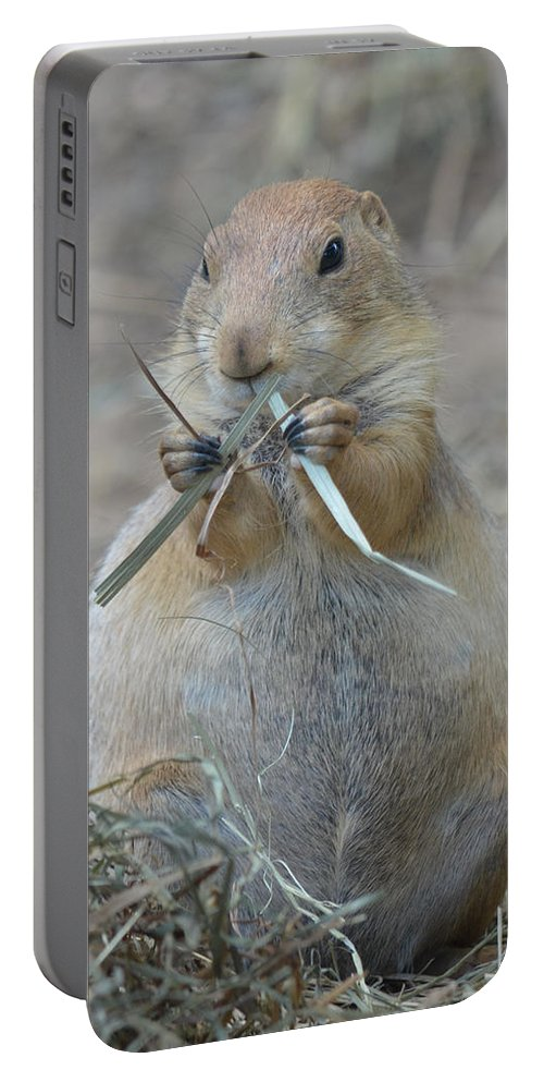 Prairie Portable Battery Charger featuring the photograph Prairie Dog Food by Richard Bryce and Family
