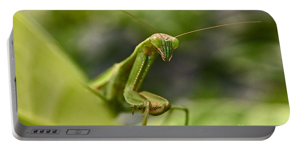 Praying Mantis Portable Battery Charger featuring the photograph Praying Mantis by Jeannette Hunt