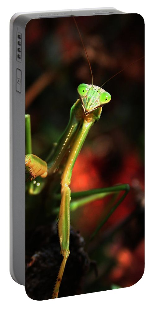Praying Mantis Portable Battery Charger featuring the photograph Praying Mantis Portrait by Linda Sannuti