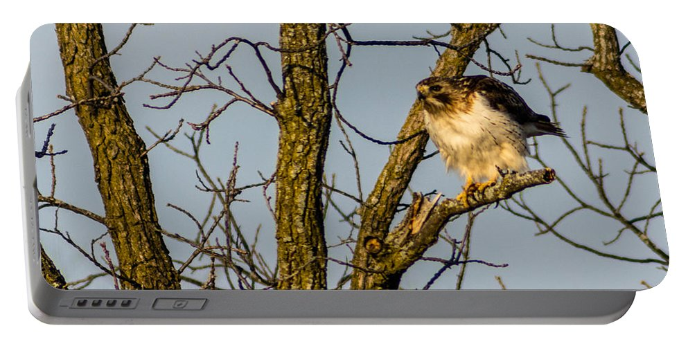 Bird Portable Battery Charger featuring the photograph Preparing To Strike by Randy Scherkenbach