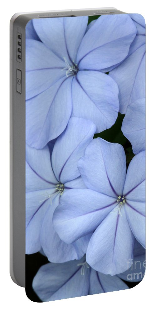 Macro Portable Battery Charger featuring the photograph Prettiest Plumbago by Sabrina L Ryan