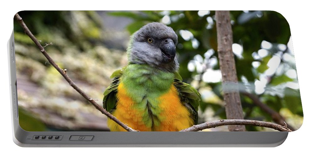 Bird Portable Battery Charger featuring the photograph Pretty Bird by Jasmin Hrnjic