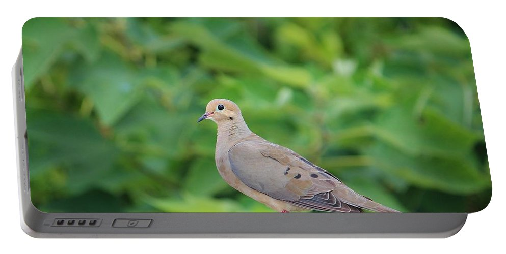 Birds Portable Battery Charger featuring the photograph Pretty Dove by Cynthia Guinn