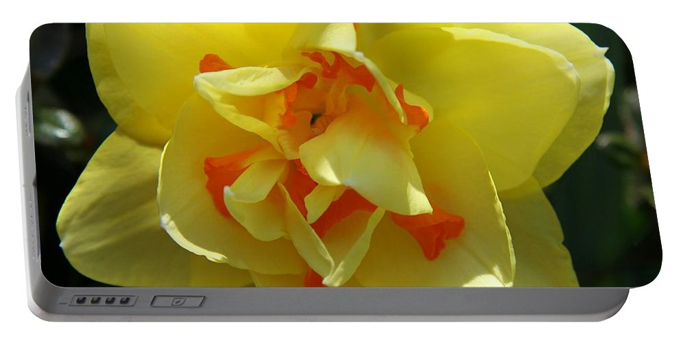 Daffodil Portable Battery Charger featuring the photograph Pretty Face by Christiane Schulze Art And Photography