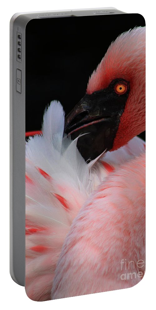 Bird Portable Battery Charger featuring the photograph Pretty In Pink by Alyce Taylor