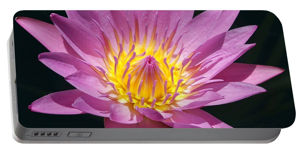 Landscape Portable Battery Charger featuring the photograph Pretty In Pink And Yellow Water Lily by Sabrina L Ryan