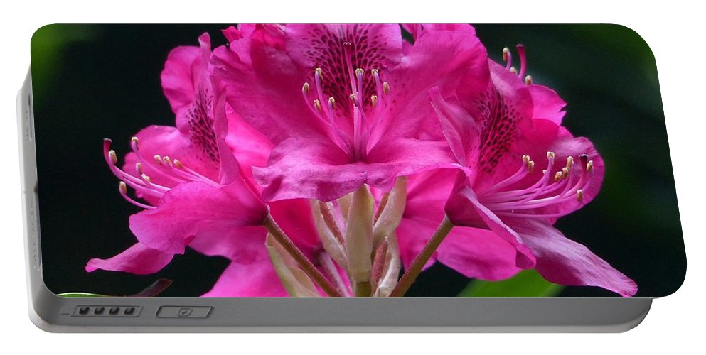 Outdoors Portable Battery Charger featuring the photograph Pretty In Pink by Charles Ford