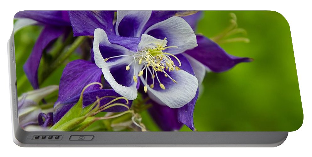 Purple Portable Battery Charger featuring the photograph Pretty In Purple by Nikki Vig