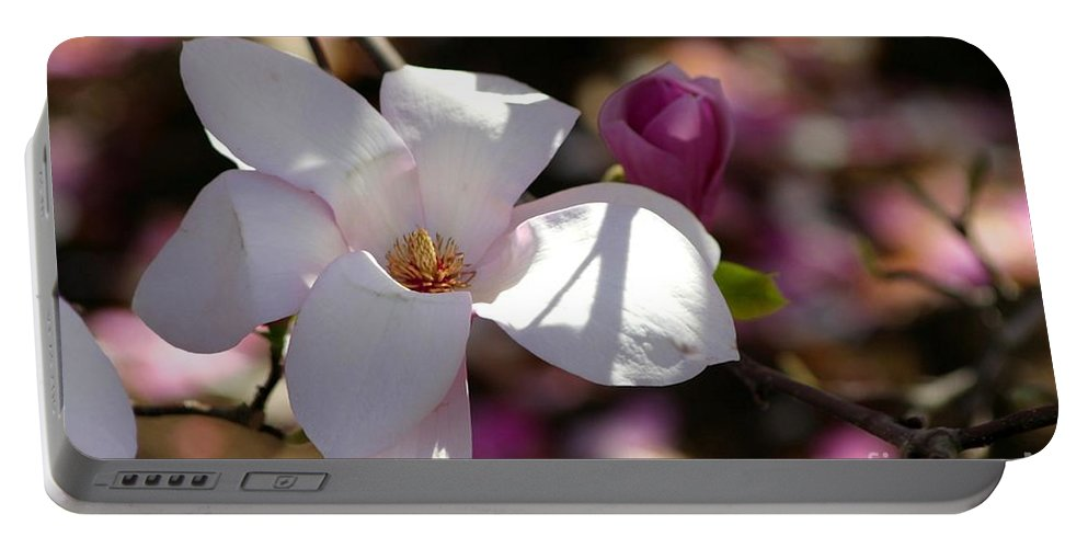 Magnolia Portable Battery Charger featuring the photograph Pretty Pale Pink Magnolia by Living Color Photography Lorraine Lynch