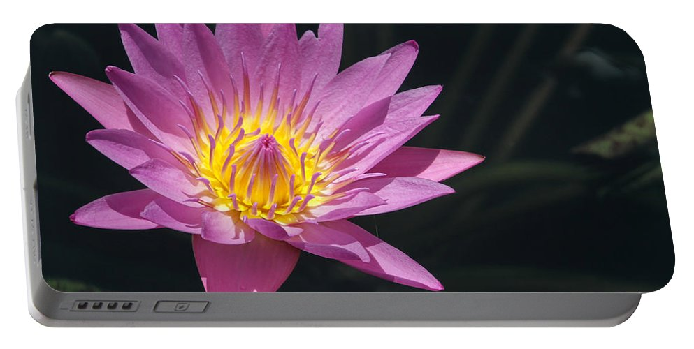 Landscape Portable Battery Charger featuring the photograph Pretty Pink And Yellow Water Lily by Sabrina L Ryan