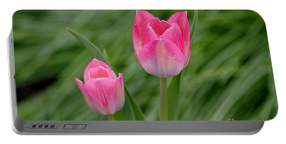 Tulips Portable Battery Charger featuring the photograph Pretty Pink Tulips by Living Color Photography Lorraine Lynch