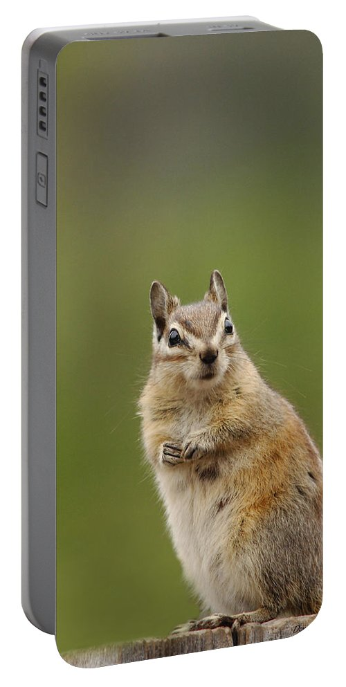 Squirrel Portable Battery Charger featuring the photograph Pretty Please by Donna Blackhall