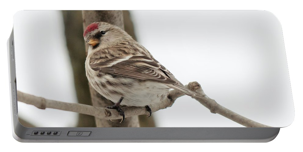 Landscapes Portable Battery Charger featuring the photograph Pretty Redpoll by Cheryl Baxter