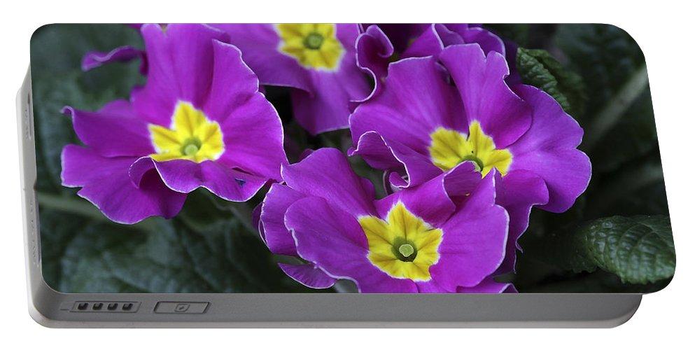 Flowers Portable Battery Charger featuring the photograph Primrose Purple by Deborah Benoit
