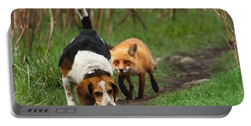 Animals Portable Battery Charger featuring the photograph Probably The World's Worst Hunting Dog by Mircea Costina Photography