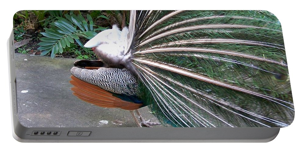 Peacock Portable Battery Charger featuring the photograph Profile by Chuck Hicks