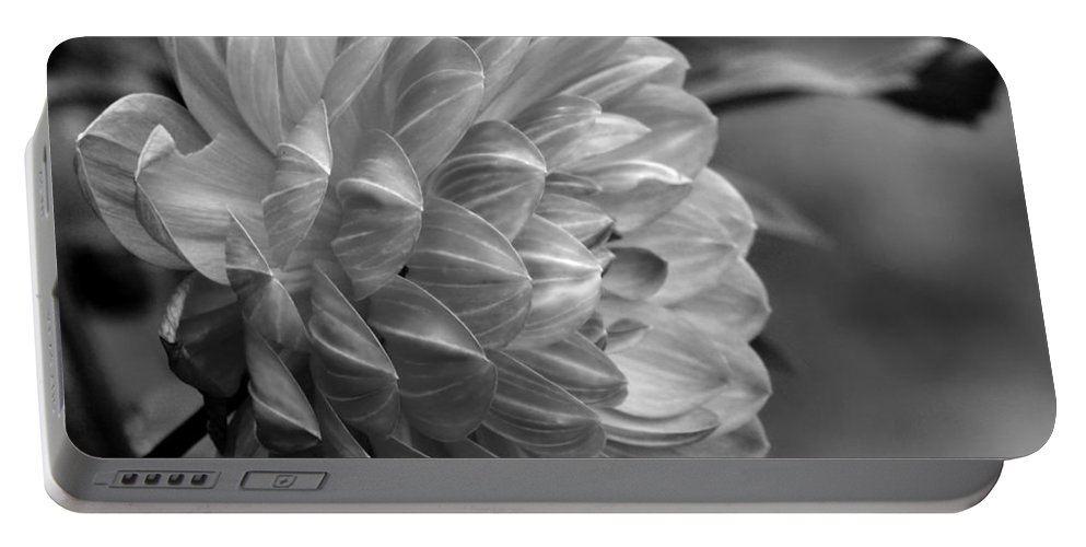 Pamela Howden Dahlia Portable Battery Charger featuring the photograph Profile Of A Pamela Howden Dahlia by Jeanette C Landstrom