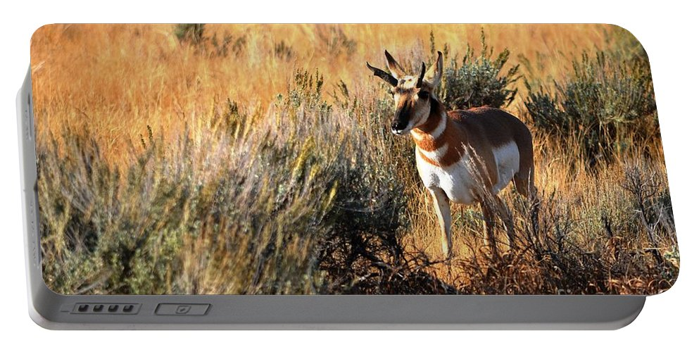Wildlife Portable Battery Charger featuring the photograph Pronghorn Buck by Deanna Cagle