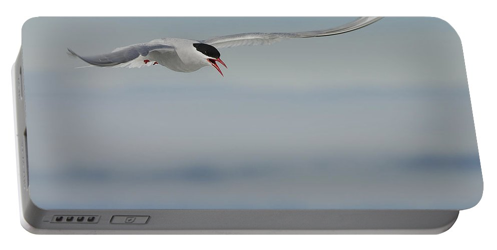Antarctic Tern Portable Battery Charger featuring the photograph Protective.. by Nina Stavlund