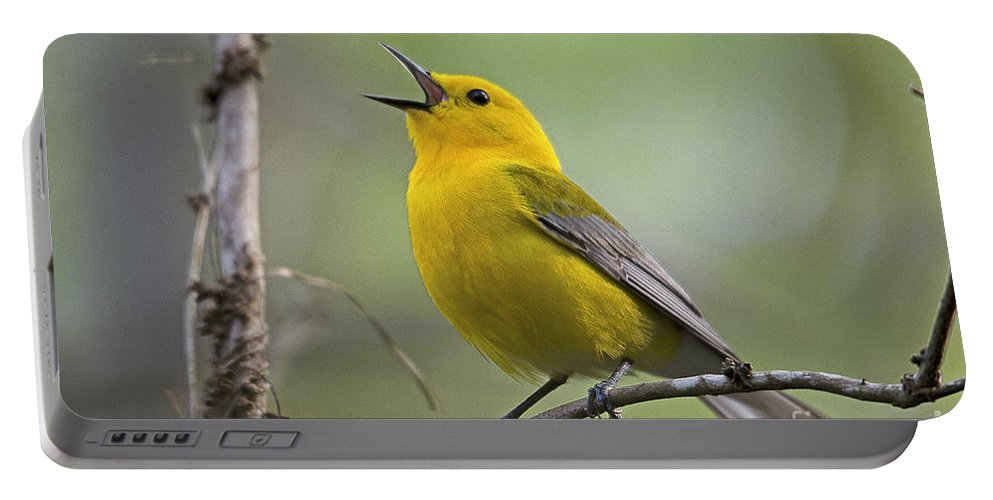Bird Portable Battery Charger featuring the photograph Prothonotary Wabler by TJ Baccari