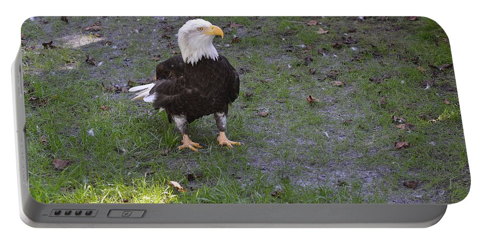 Homosassa Portable Battery Charger featuring the photograph Proud Bald Eagle by Linda Kerkau