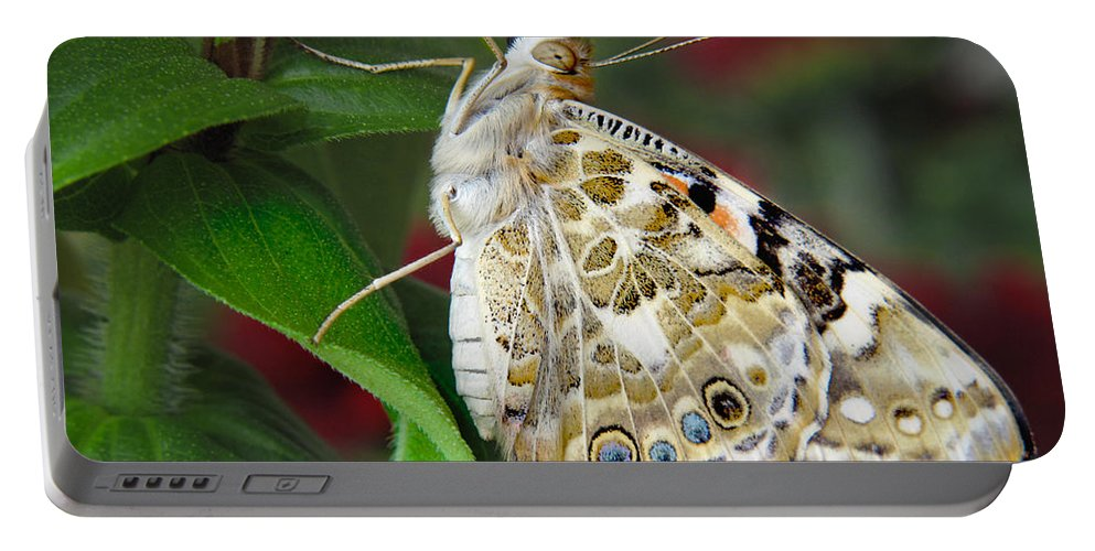 Butterfly Portable Battery Charger featuring the photograph Proud by David and Carol Kelly