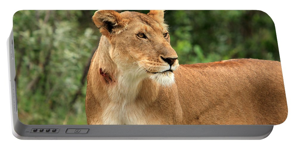Africa Portable Battery Charger featuring the photograph Proud Lioness by Aidan Moran