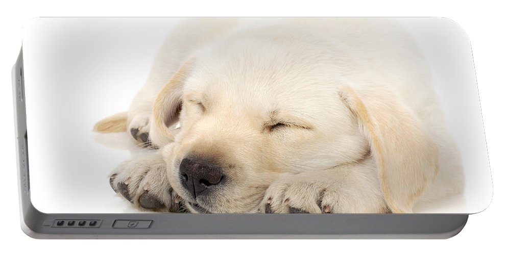 Adorable Portable Battery Charger featuring the photograph Puppy Sleeping On Paws by Johan Swanepoel