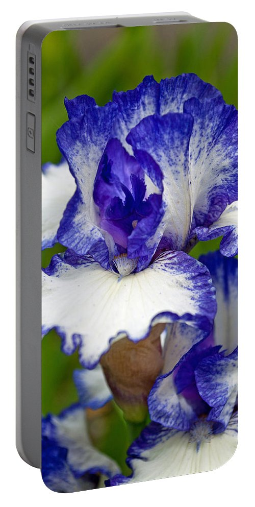 Purple And White Iris Portable Battery Charger featuring the photograph Purple And White Iris by Tikvah's Hope