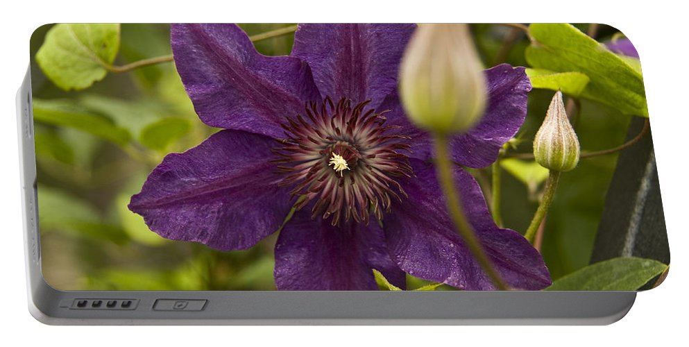 : Rose Photographs Portable Battery Charger featuring the photograph Purple Bloom by Vernis Maxwell