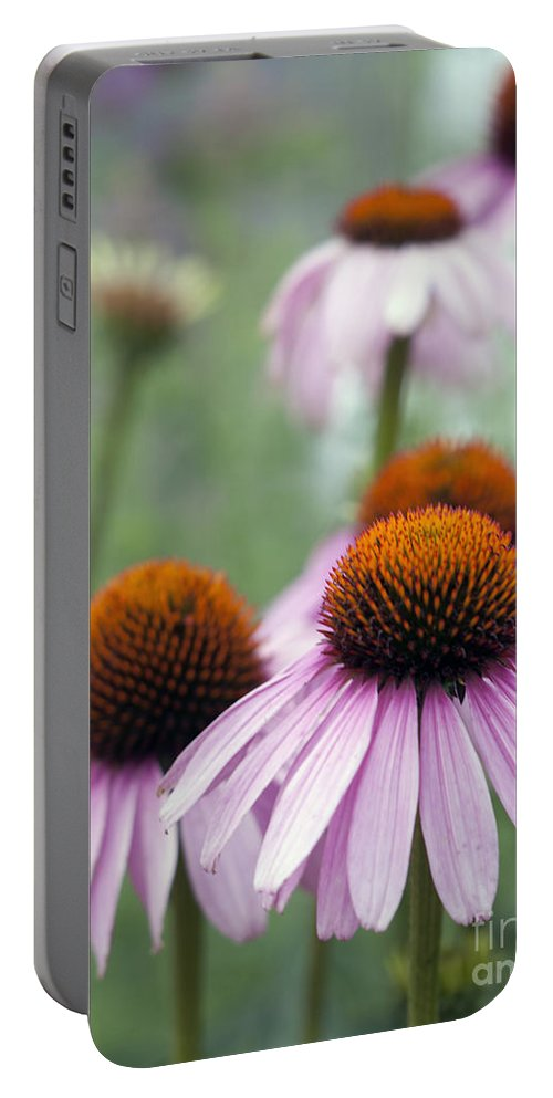 Beauty In Nature Portable Battery Charger featuring the photograph Purple Coneflower by Juli Scalzi
