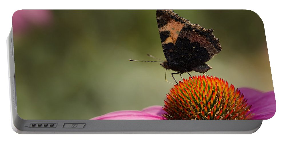 Echinacea Portable Battery Charger featuring the photograph Purple Echinacea Flower by TouTouke A Y