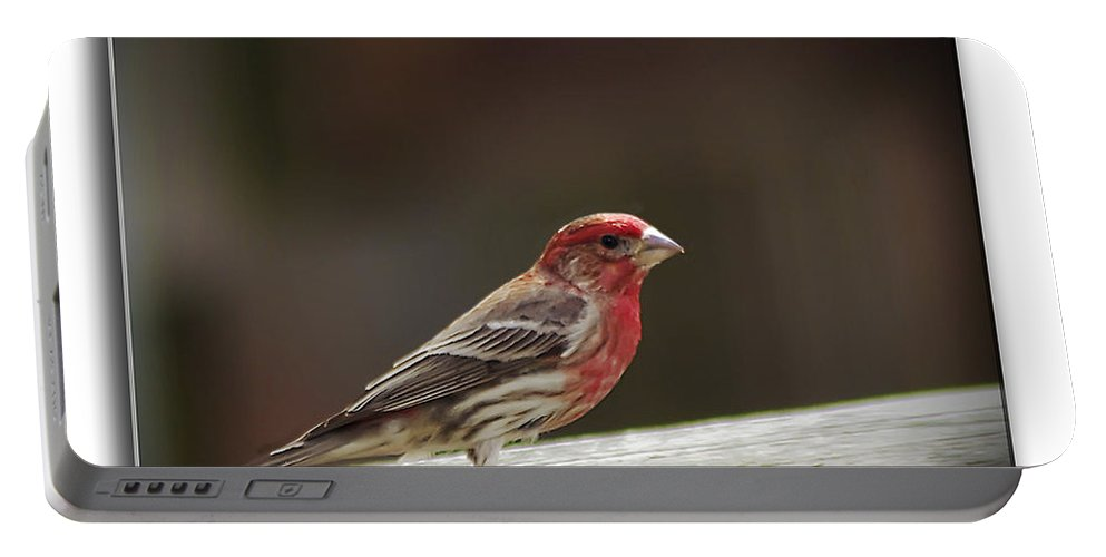 2d Portable Battery Charger featuring the photograph House Finch by Brian Wallace